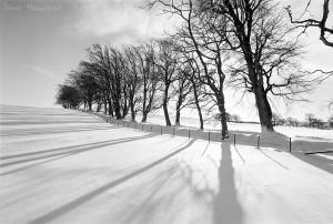 a701trees_snow